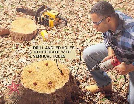 بعد از بریدن درخت ، با کنده ی آن چه کنیم؟